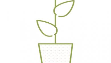 Plants vivants